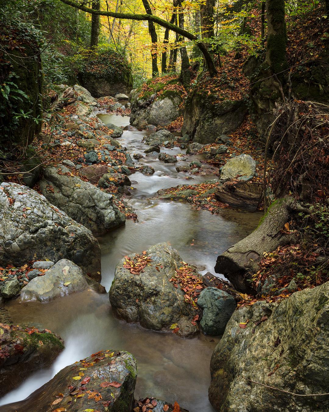 Donwload Photo Kaligrafi Yenice, Karabük, Türkiye غابات مدينة ينيجه في تركيا…- ozcay