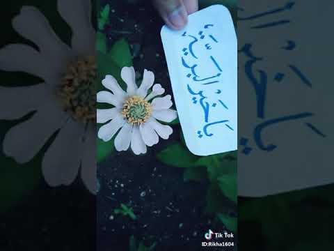 Download Video Tik tok sholawat ya habibal qolby versi kaligrafi hiasan arab