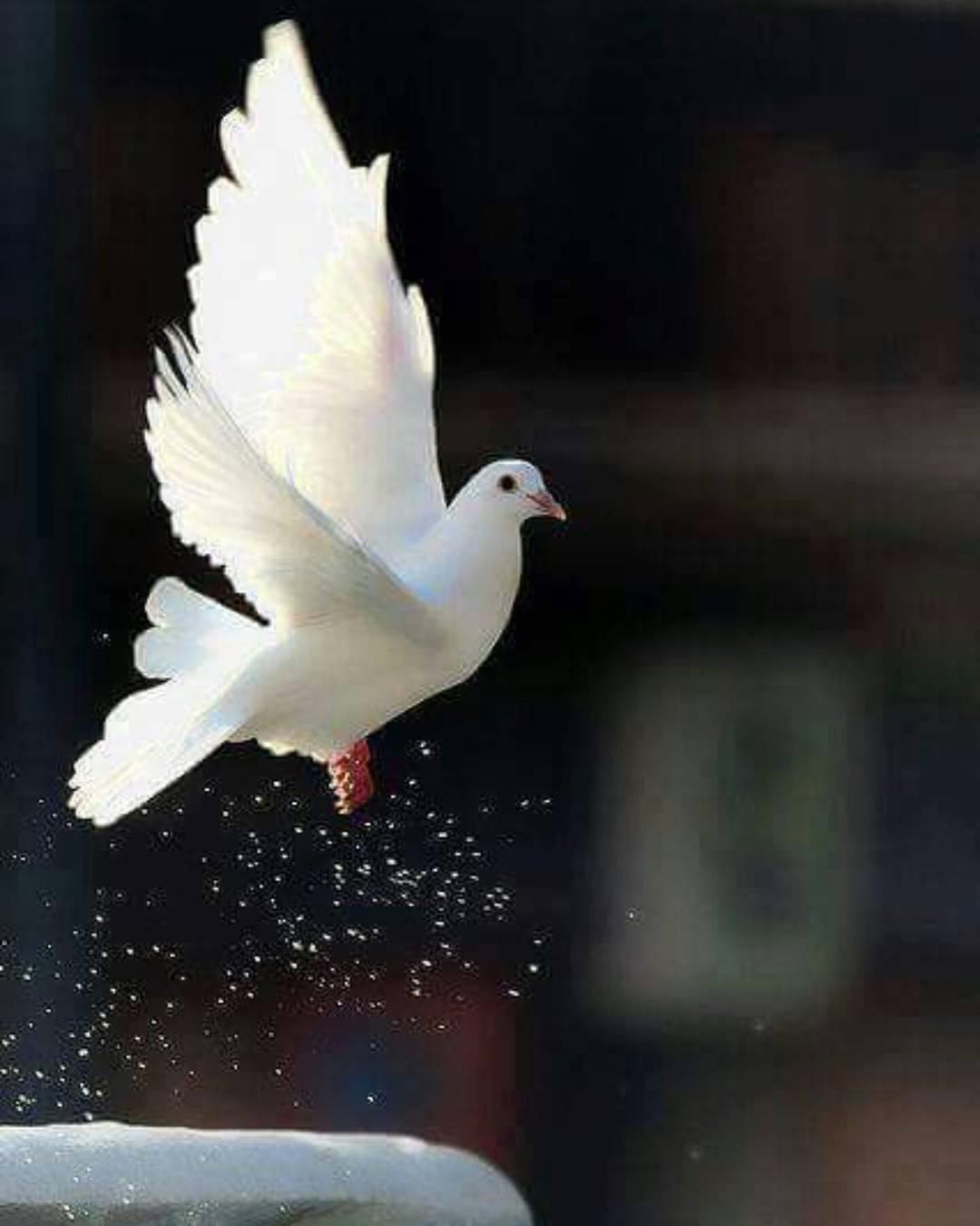 Donwload Photo Kaligrafi Saldım gönlümü gökyüzüne arşı dolansın, Bin bir ismini anda bir gün duysun ve an…