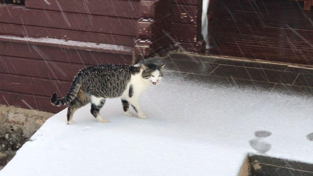 Donwload Photo Kaligrafi @birunkumbet 'de bu sabah kar var. Mutluyuz…- ozcay