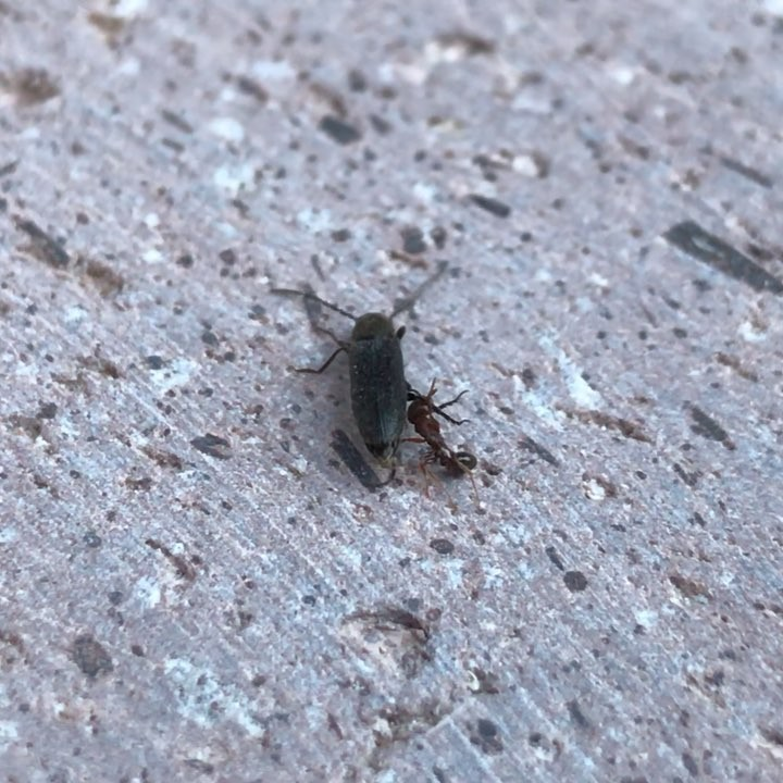 Donwload Photo Kaligrafi İnatcı karınca. النملة العنيدة…- ozcay