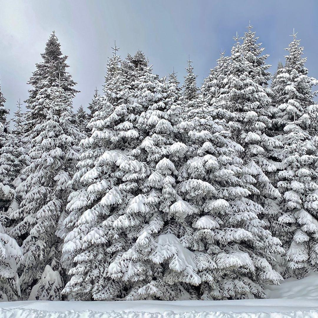 Donwload Photo Kaligrafi Geredede kış #kış #doğa #kar #orman…- Osman Ozcay