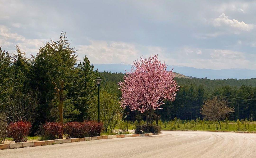Donwload Photo Kaligrafi İlkbahar #doğa #bahar #çiçek #yeşil…- Osman Ozcay