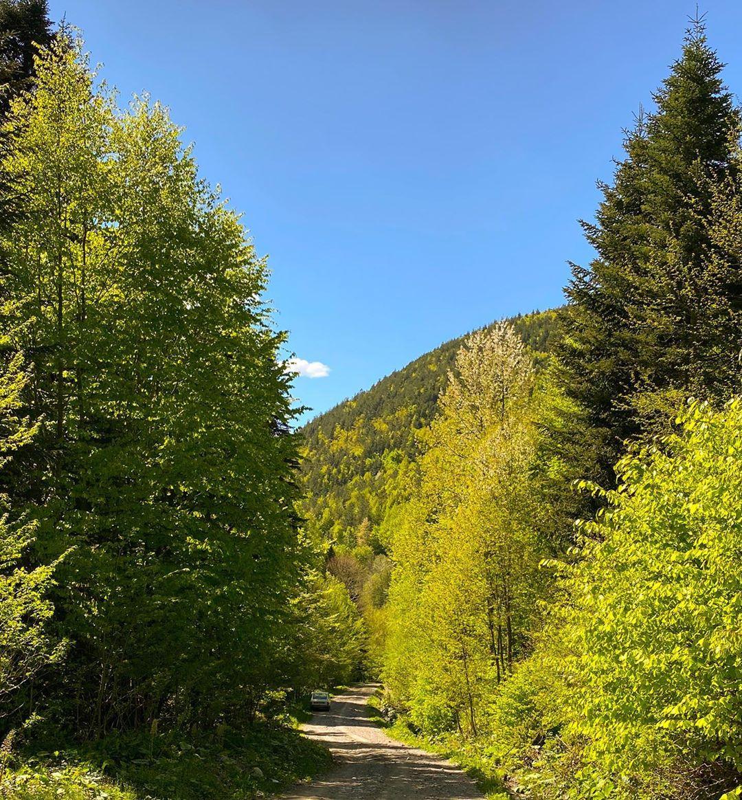 Donwload Photo Kaligrafi Mengen dağlarından #orman #ağaç #yeşil #doğa #tabiat…- Osman Ozcay