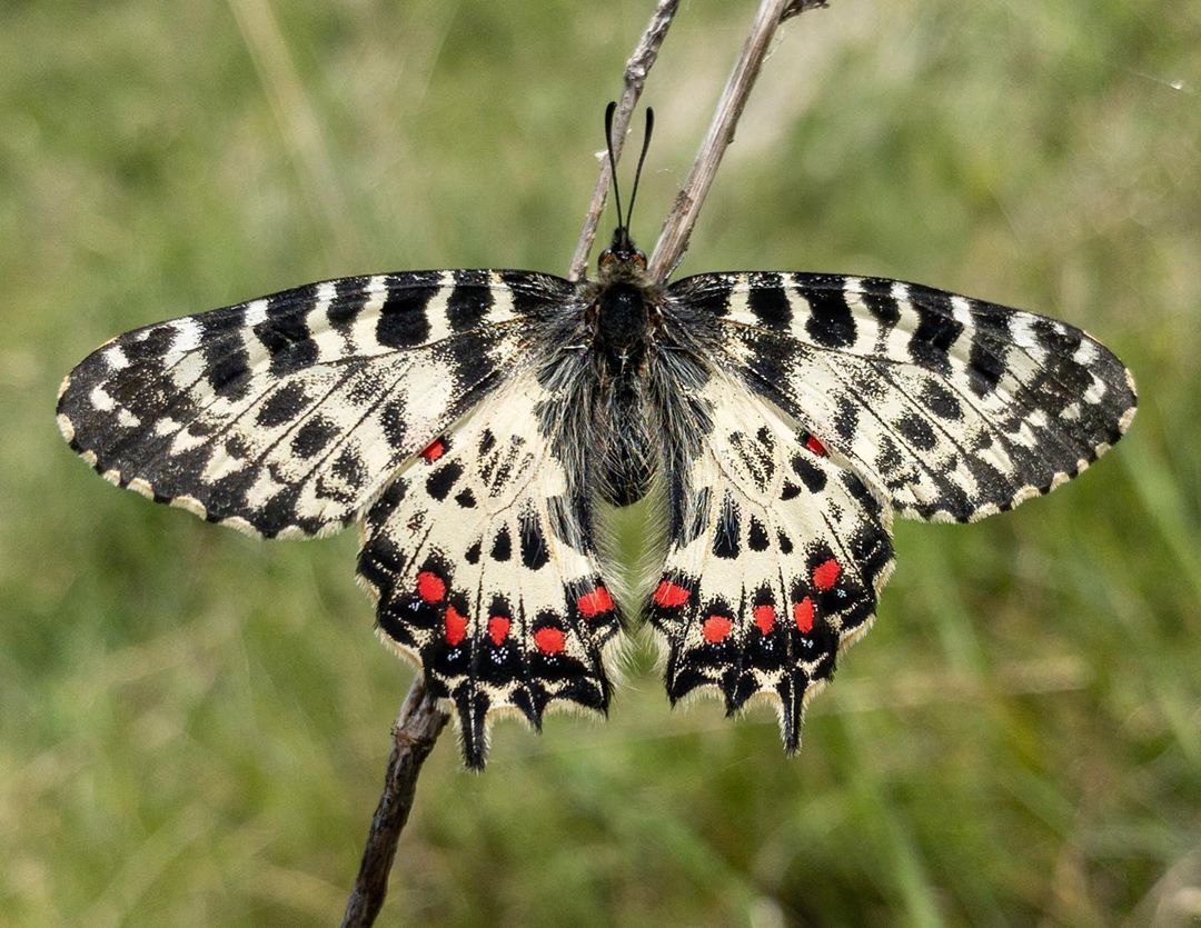 Donwload Photo Kaligrafi Orman Fistosu #kelebek #butterfly…- Osman Ozcay