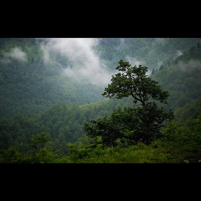 Donwload Photo Kaligrafi Çaykara dağları, جبال چاي قره...- ozcay 1