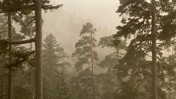 Donwload Photo Kaligrafi #orman #sis #forest #fog…- ozcay