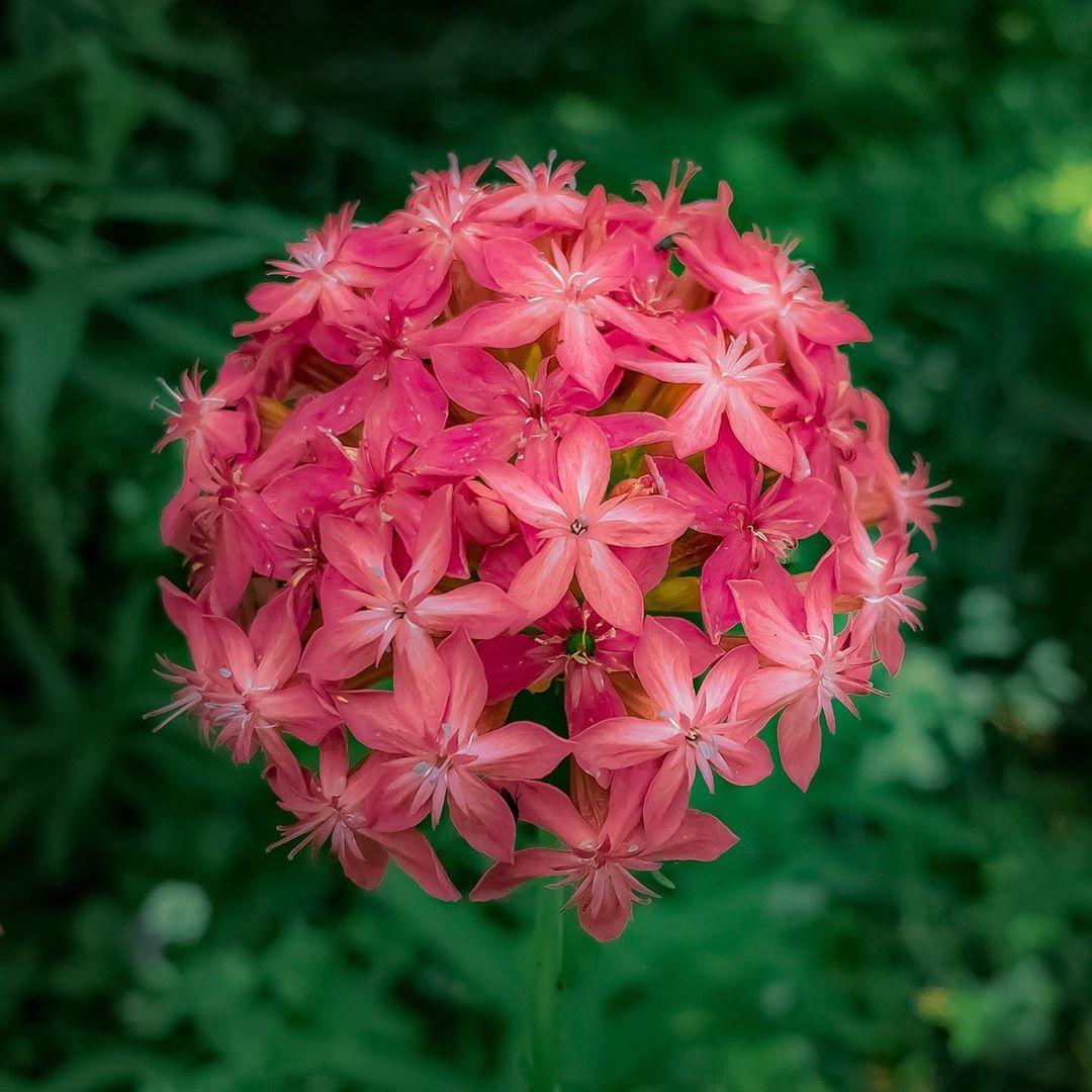 Donwload Photo Kaligrafi Ormanda yetişen bir çiçek. İsmini bilmiyorum. #çiçek #flowers...- Osman Ozcay 2