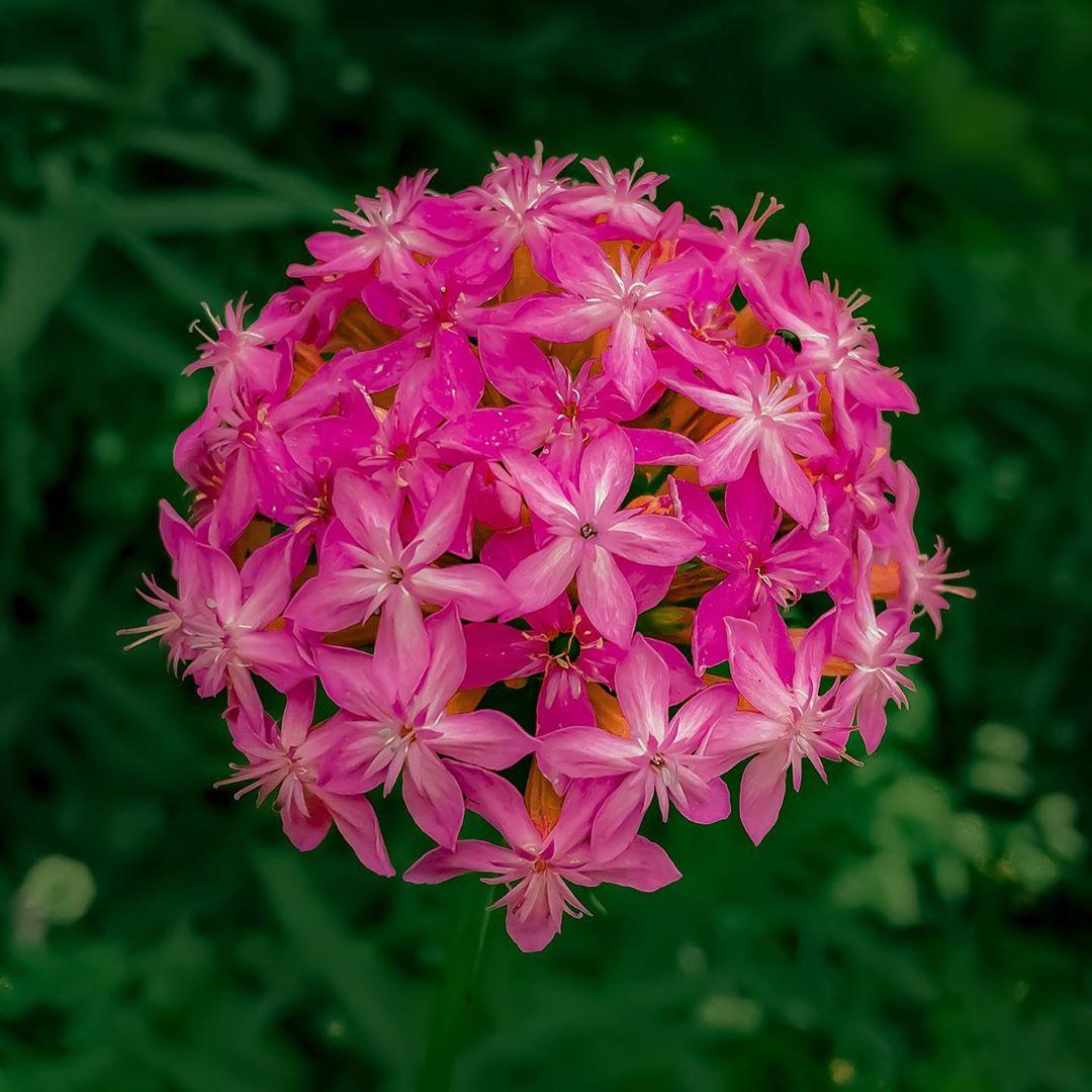 Donwload Photo Kaligrafi Ormanda yetişen bir çiçek. İsmini bilmiyorum. #çiçek #flowers...- Osman Ozcay 3
