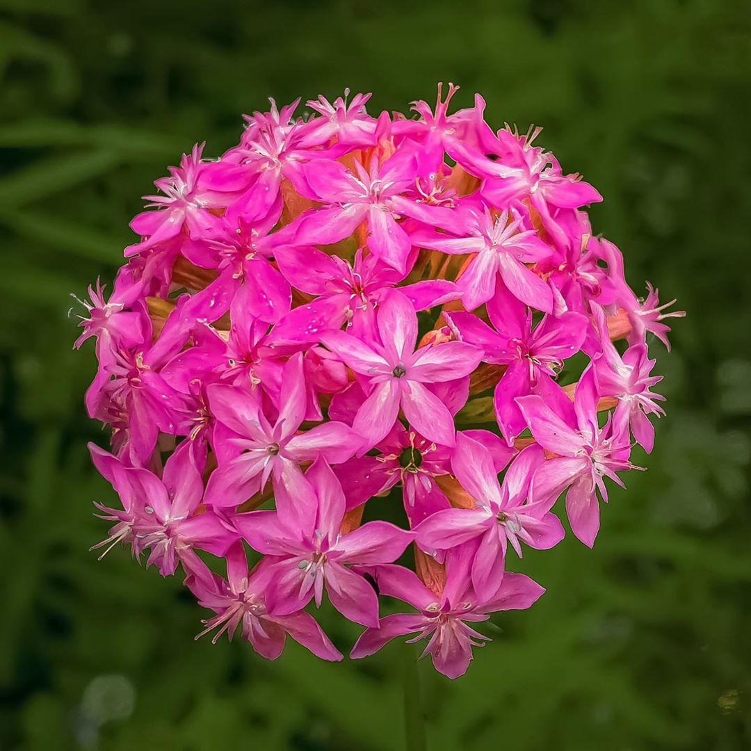 Donwload Photo Kaligrafi Ormanda yetişen bir çiçek. İsmini bilmiyorum. #çiçek #flowers...- Osman Ozcay 4