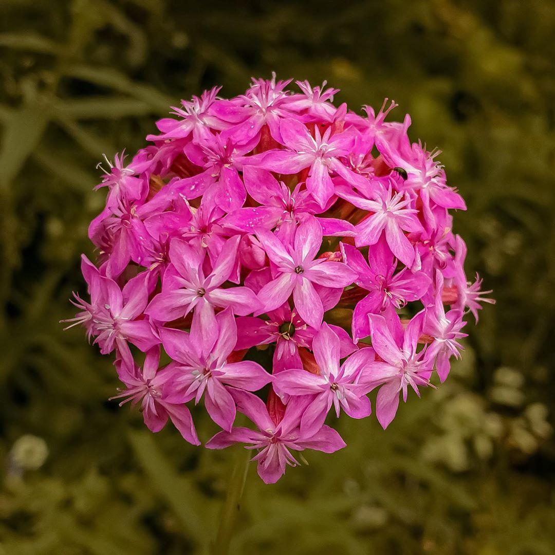 Donwload Photo Kaligrafi Ormanda yetişen bir çiçek. İsmini bilmiyorum. #çiçek #flowers...- Osman Ozcay 5