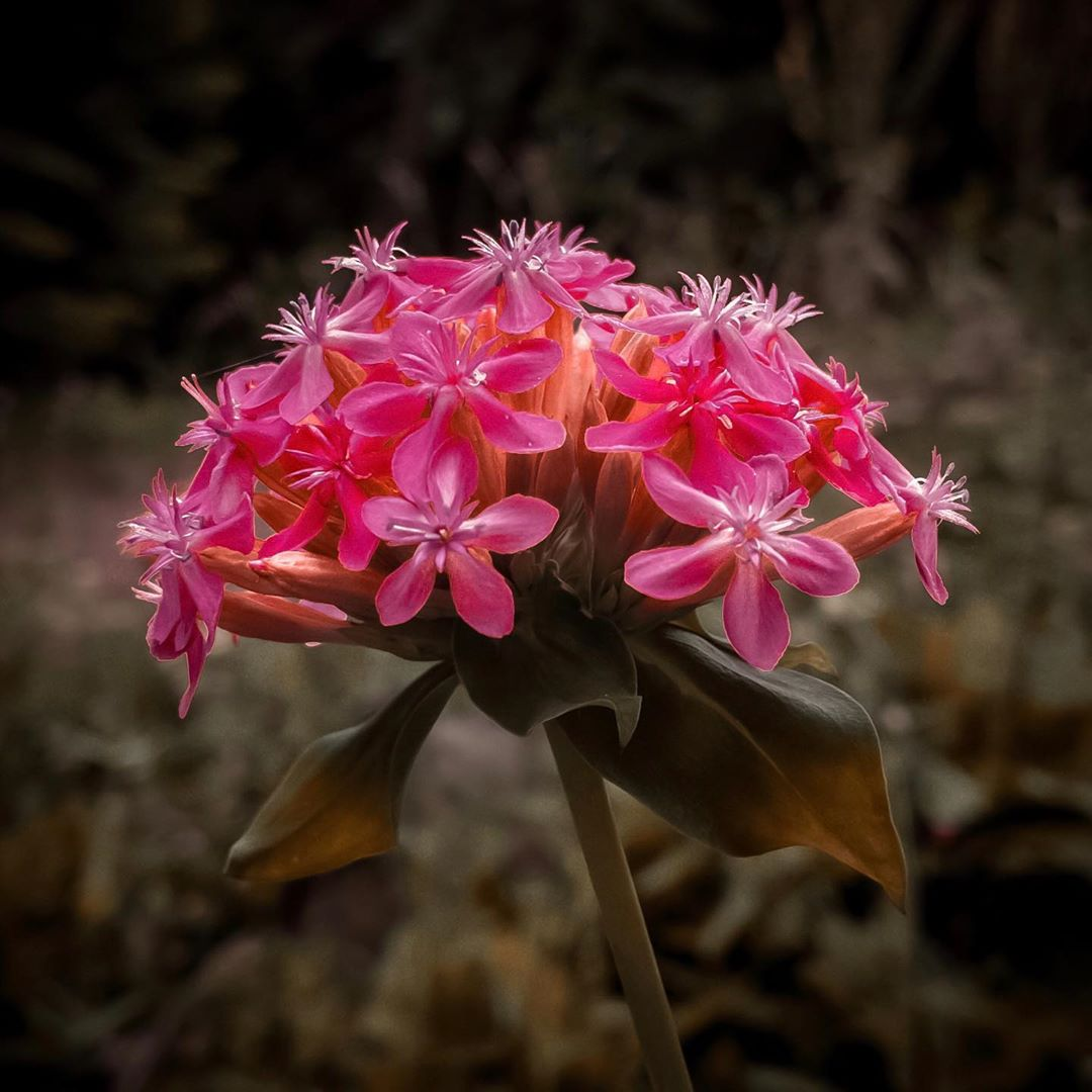 Donwload Photo Kaligrafi Ormanda yetişen bir çiçek. İsmini bilmiyorum. #çiçek #flowers…- Osman Ozcay