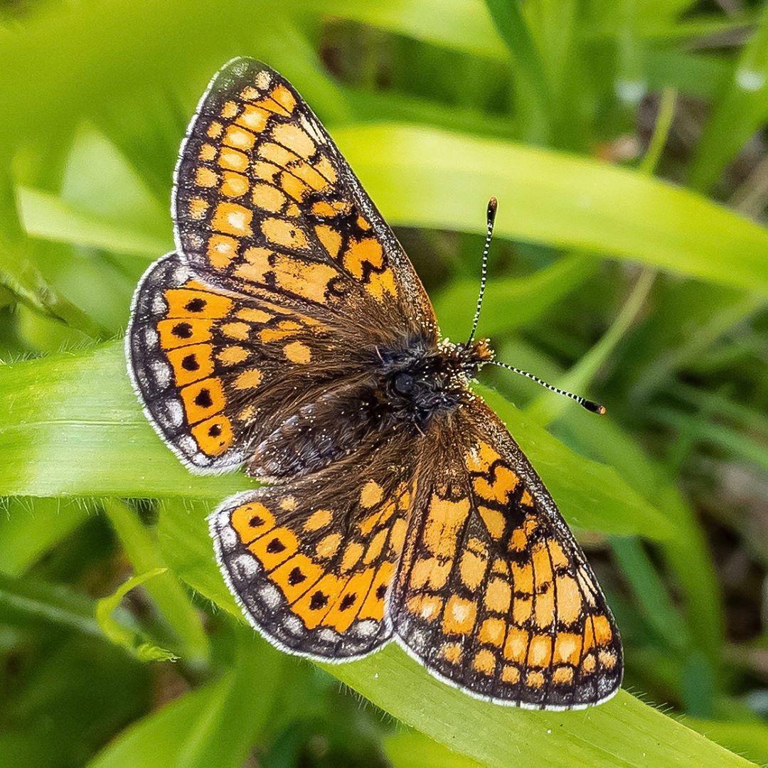 Donwload Photo Kaligrafi Güzel Nazuğum #kelebek #butterfly #doğa #tabiat #yeşil...- Osman Ozcay 3