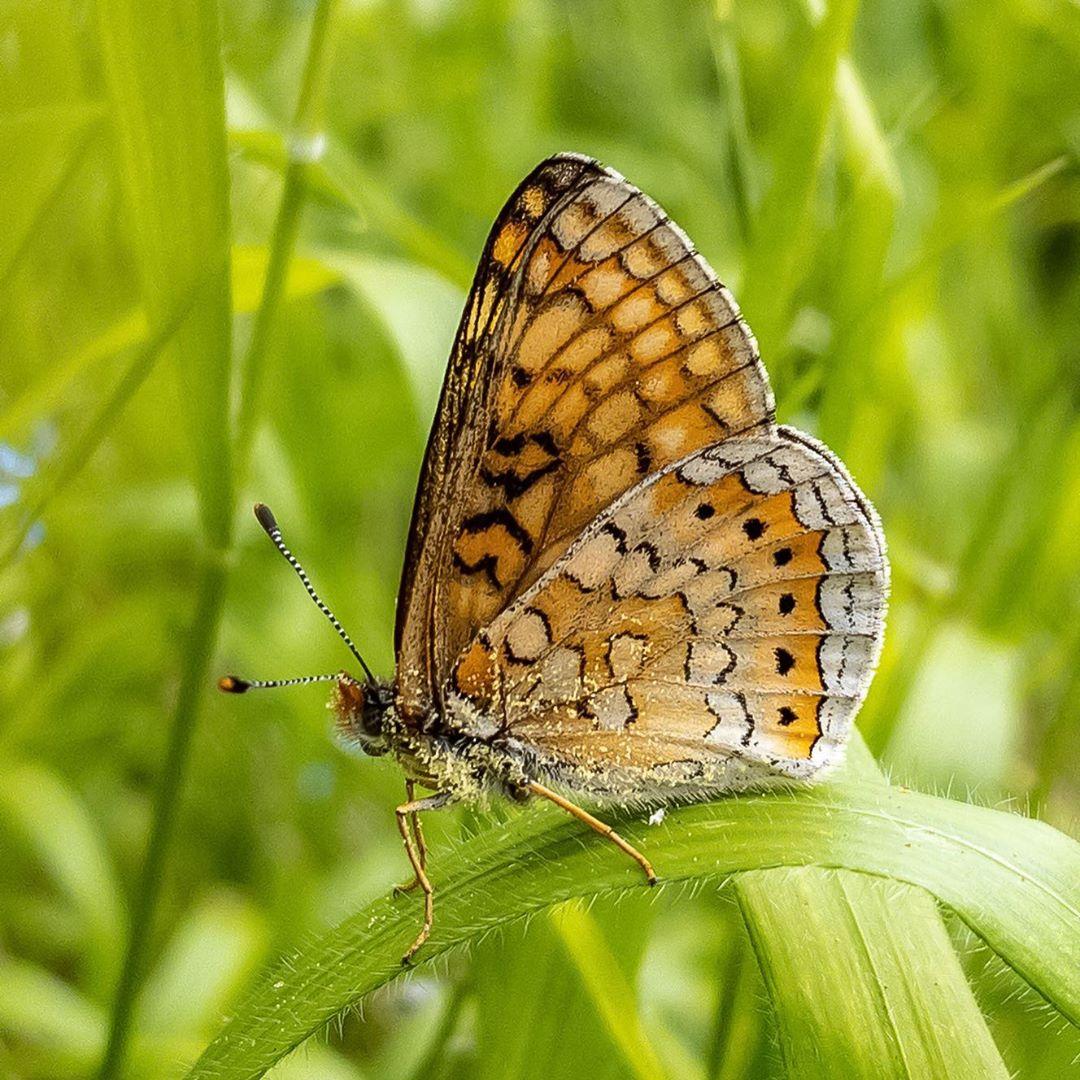 Donwload Photo Kaligrafi Güzel Nazuğum #kelebek #butterfly #doğa #tabiat #yeşil...- Osman Ozcay 2