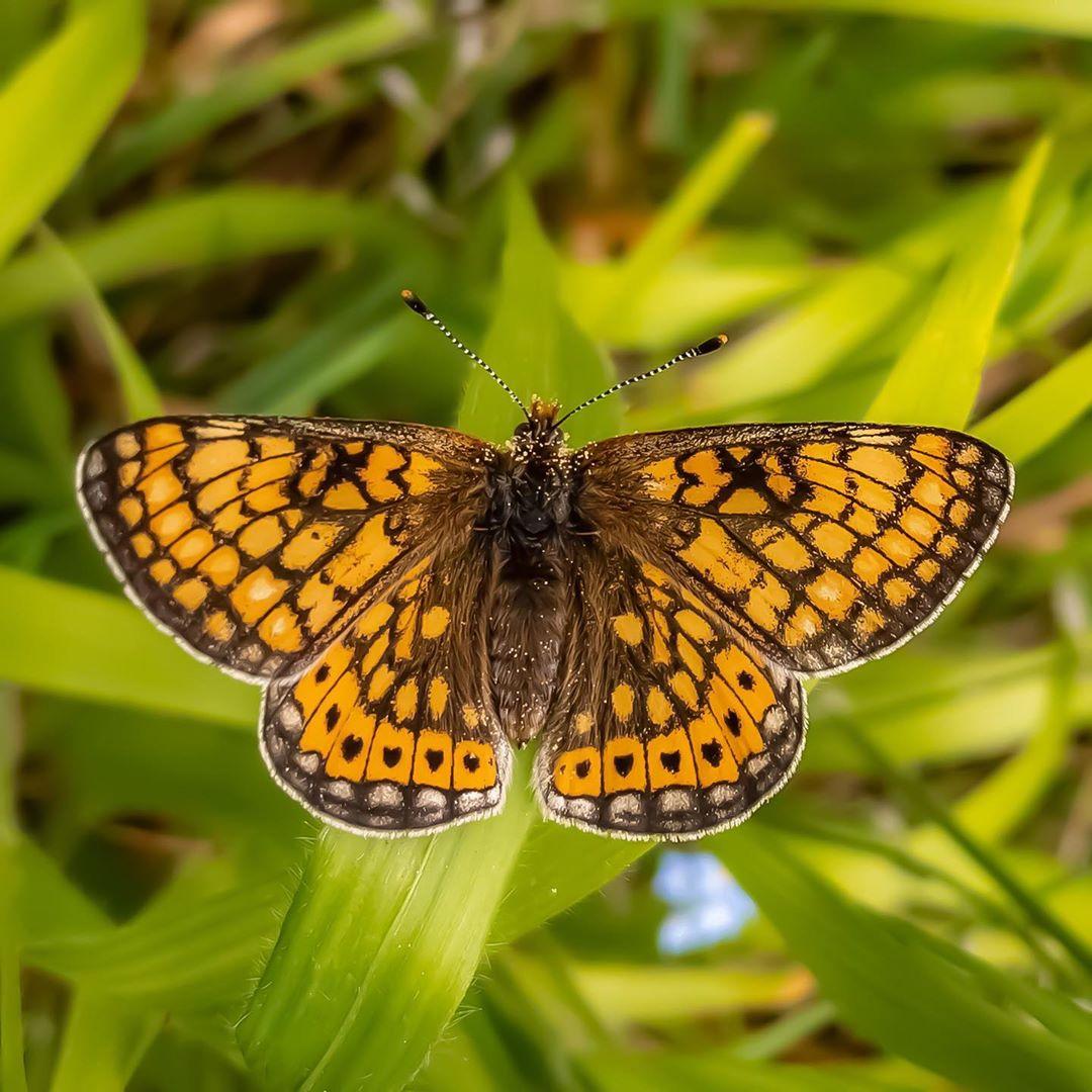 Donwload Photo Kaligrafi Güzel Nazuğum #kelebek #butterfly #doğa #tabiat #yeşil…- Osman Ozcay