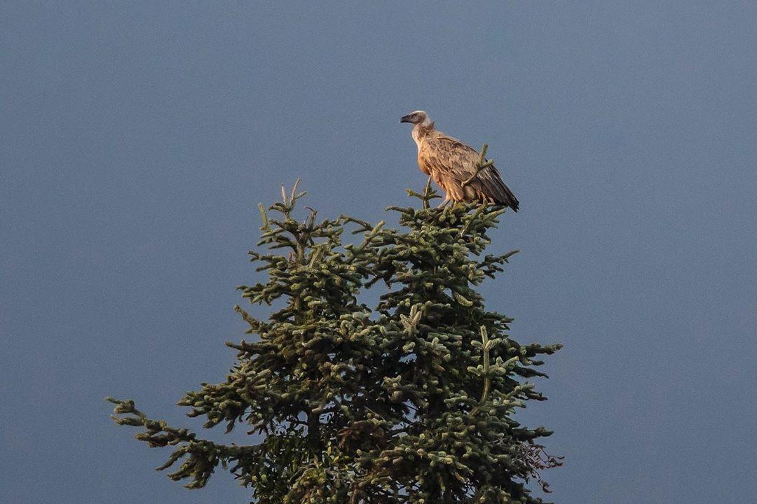 Donwload Photo Kaligrafi #akbaba #vulture #vultures…- ozcay