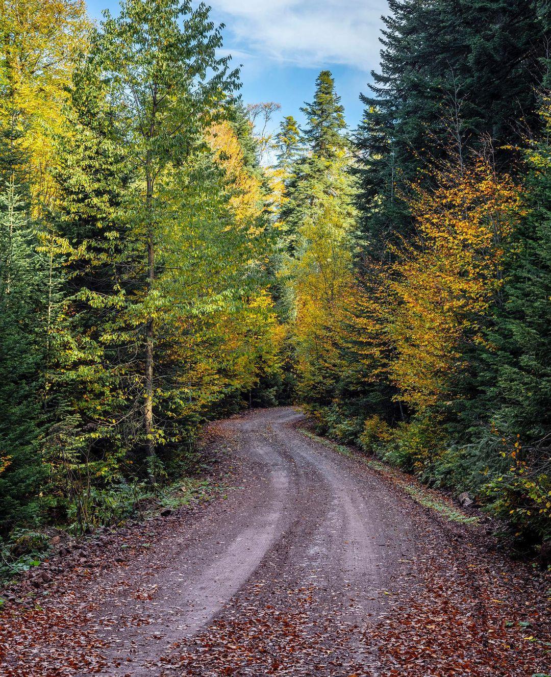 Donwload Photo Kaligrafi #sonbahar #autumn...- ozcay 4
