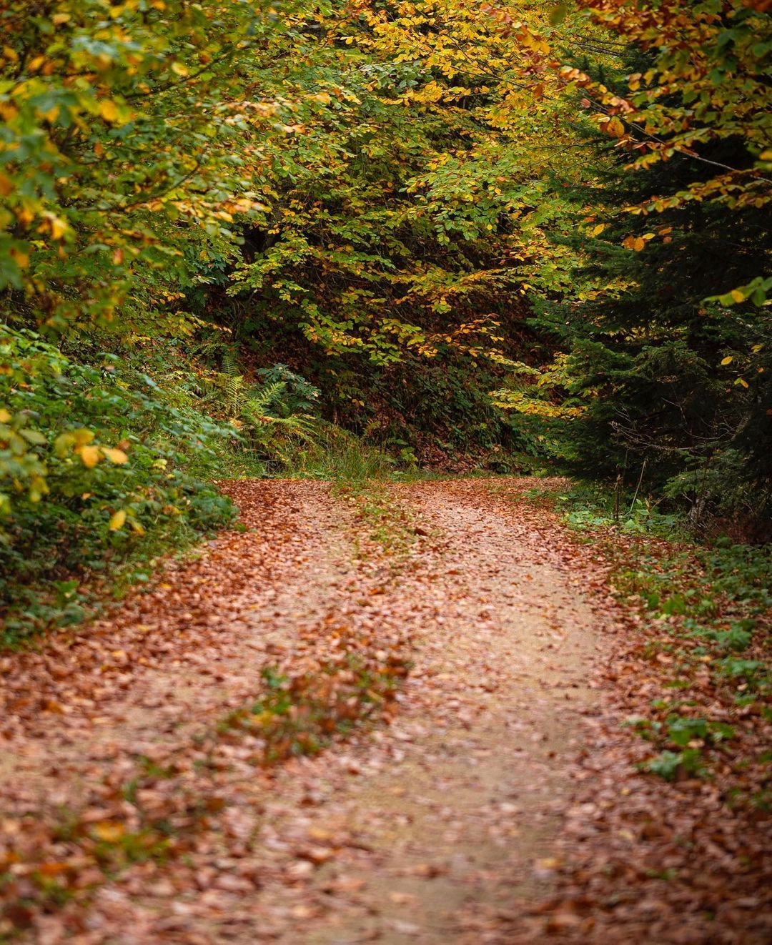 Donwload Photo Kaligrafi #sonbahar #autumn...- ozcay 3
