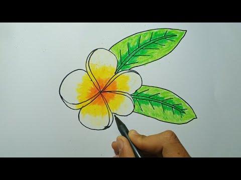 Download Video cara menggambar bunga kamboja bali