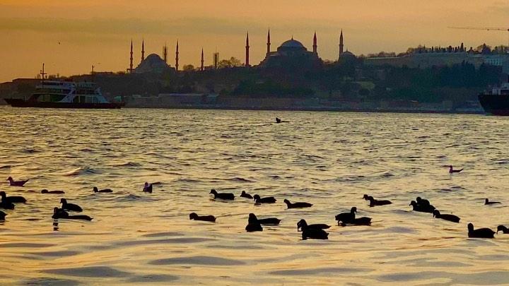 Donwload Photo Kaligrafi #istanbul #ayasofya #hagiasophia #sultanahmet #bluemosque…- ozcay