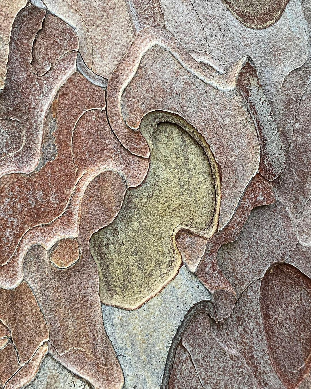 Donwload Photo Kaligrafi Çam ağacı kabuğu. Modern sanatın ilham kaynağı mı?…- ozcay