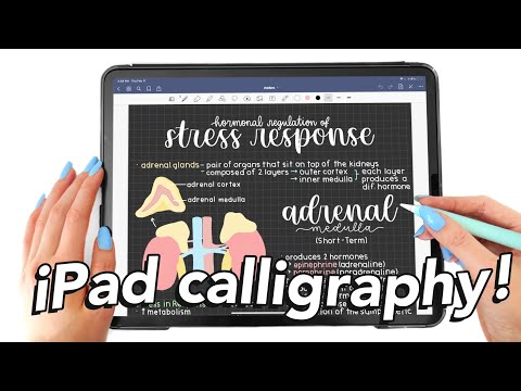 Download Video iPad calligraphy tutorial 🌷procreate, goodnotes, notability